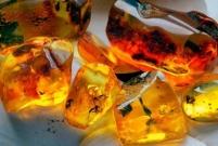 Прозрачный янтарь: разнообразие цветов